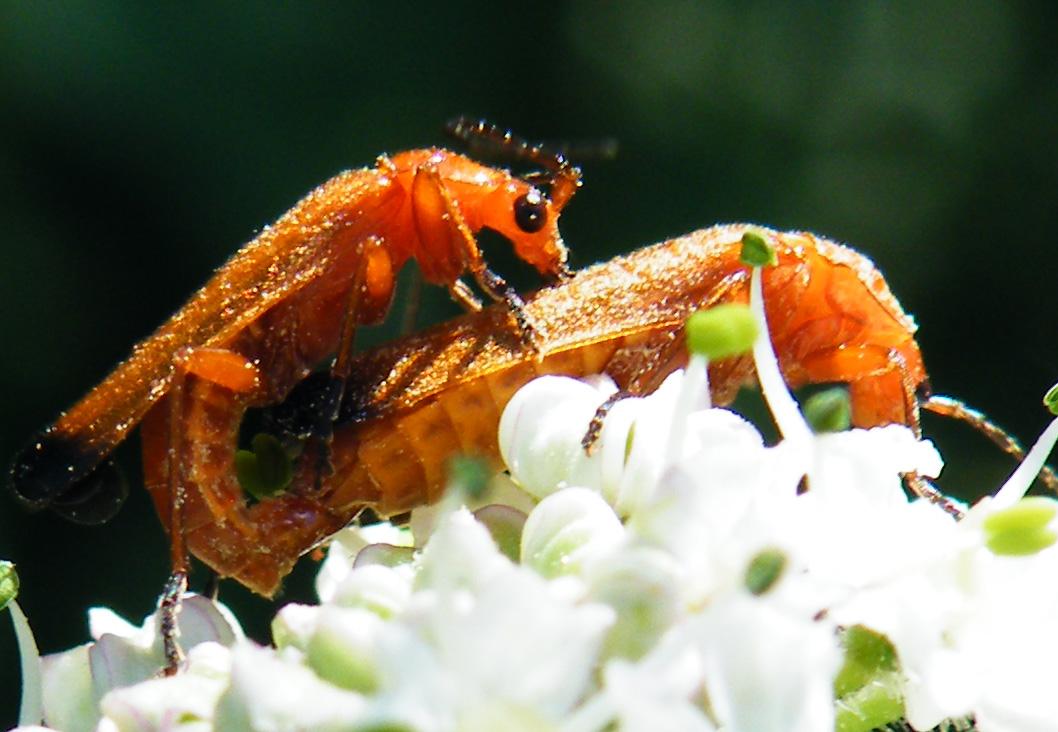 insecte9.jpg